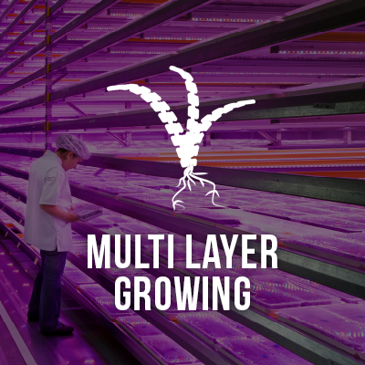 ViVi - Multi Layer Growing